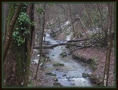 Woods in Winter (Jan 130) Tags: mist snow cold ice woods slippery longwalk 30december2010
