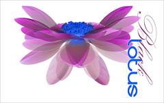 Black Lotus - The lotus Butterfly -  BlackLotus-50-1250 (Bahman Farzad) Tags: black flower macro yoga design peace lotus relaxing peaceful meditation therapy lotusflower lotuspetal blacklotus lotuspetals mimamorflowers lotusflowerpetals lotusflowerpetal