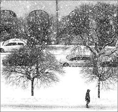 . (*Kicki*) Tags: trees winter bw snow cars person nikon sweden stockholm schweden nikond100 sverige d100 snowfall suede monocrome östermalm 2011 svartvitt kicki birgerjarlsgatan svenskaamatörfotografer kh67