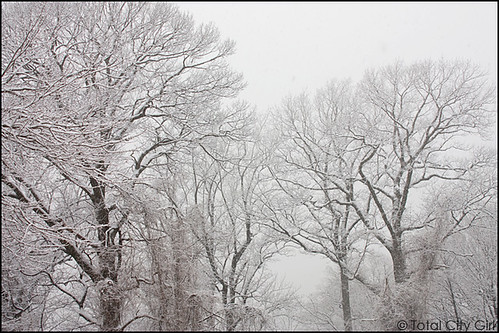 snow0107-2