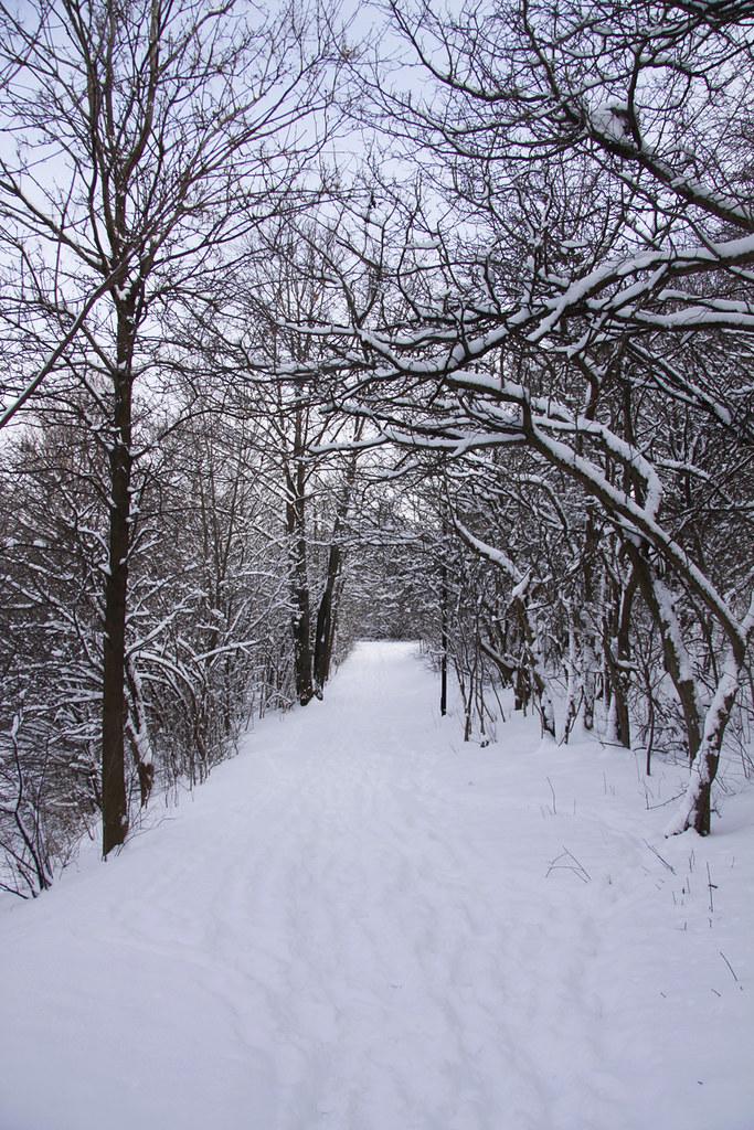 snowy park path2