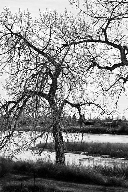 Tree by the bank