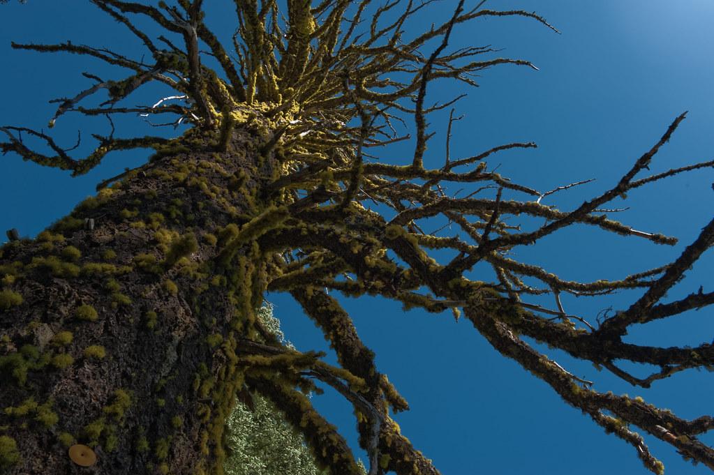 Lichens of Lassen