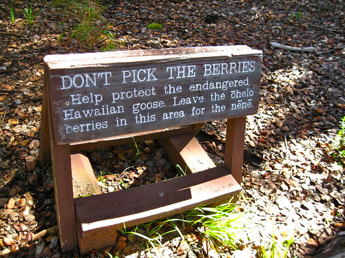 Don't pick the berries