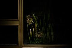 spookyPrivateGarden (davidclifford) Tags: door city shadow urban plants color building portugal garden dark golden lisboa lisbon entrance spooky urbanjungle chiaroscuro ricoh grdii ricohgrdii
