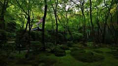 another rainy day  / into  greenery (maco-nonchR(on/off)) Tags: gioji kyoto green greenery temple moss gio tairanokiyomori  buddha love tragiclove brokenheart