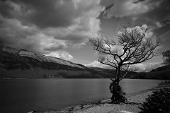 Old tree (Drew MacKellar) Tags: loch lomond blackandwhite tree nikon d7200 scotland
