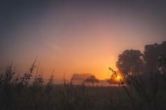 Sunrise Frost (lutzheidbrink) Tags: naturephotography natue nature nikon d5000 kitlense landscape sunrise germany travelphotography travel