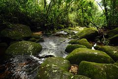 Perenque Fluss im Serra dos Orgãos NP