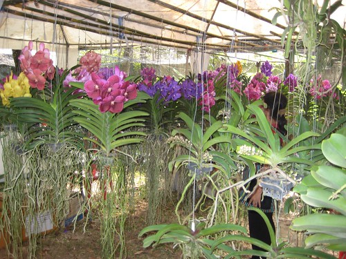 Khun Oi's orchid stall at Rose Garden, Nakhon Pathom