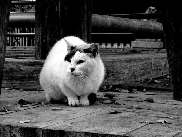 Today's Cat@2010-12-04