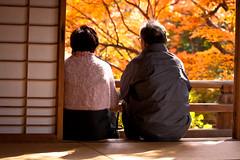 IMG_1865 (gregxu6) Tags: autumn leaves japan maple kyoto    peopleenjoyingnature