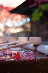 20101121 Jyokouji 4 (Tyouzu-Bachi) (BONGURI) Tags: autumncolors 紅葉 愛知 aichi ricoh a12 seto gxr 手水 autumntints 瀬戸 手水鉢 定光寺 jyokouji dwcffcolorful