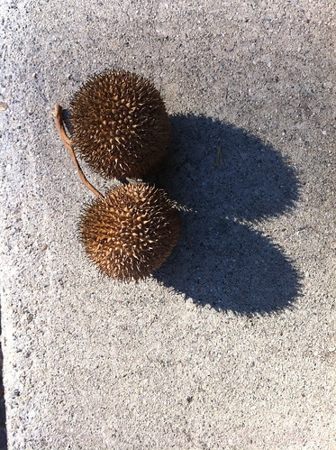 Two Prickley Balls