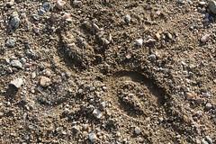 Itinerari de barraques de pedra seca a Mont-roig del Cam (ExploraTgn.cat) Tags: baixcamp montroigdelcamp pedraseca barraquesdepedraseca
