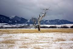 Lone tree (aebphoto) Tags: winter tree wyoming lonetree bighornmountains sheridanwy mygoodfriendjoannaloveslonetrees itookthispictureforher shesawesomed