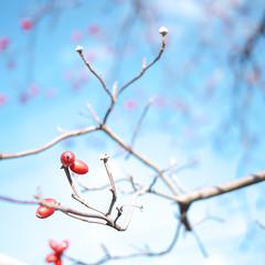 Sunday Afternoon Walking #02 (Takahiro Yamamoto (2nd account)) Tags: blue winter red sky tree nature tokyo