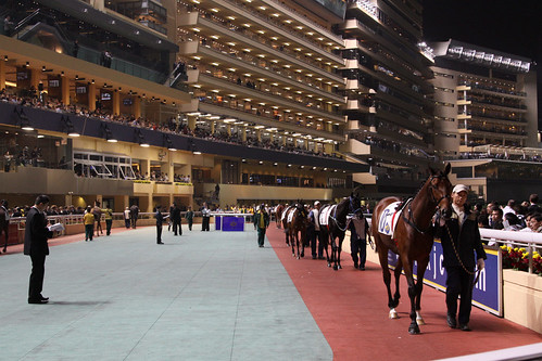 Leading the horses around the mounting yard