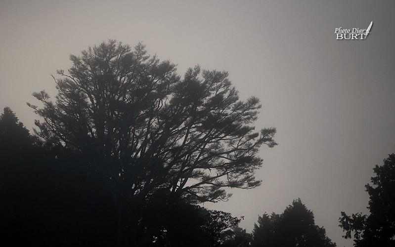 迷霧森林2