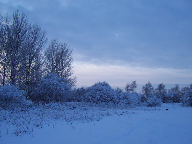 east_yorkshire_trees_in_snow_006