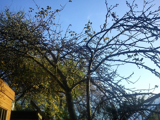 Our apple tree in winter