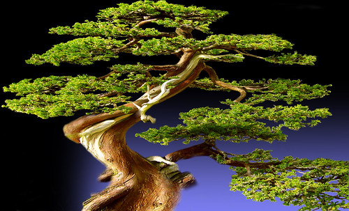 """Bonsai 081 • <a style=""""font-size:0.8em;"""" href=""""http://www.flickr.com/photos/30735181@N00/5261328109/"""" target=""""_blank"""">View on Flickr</a>"""