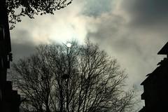 14 dicembre 2010 - December Views 2010 (Zelda was a writer) Tags: alberi milano cielo sole freddo