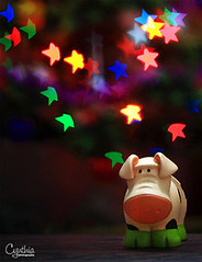 Playing With Bokeh - Piggy