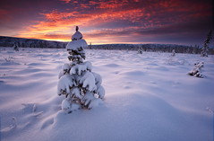 December Sunset (Wolfhorn) Tags: winter snow cold nature alaska wilderness decembersunset