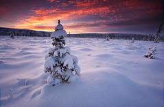 December Sunset (Wolfhorn) Tags: winter snow cold nature alaska wilderness decembersunset