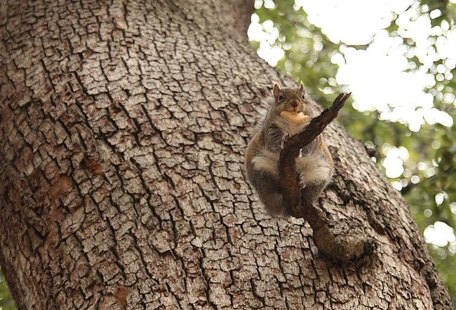 cookiesquirrel
