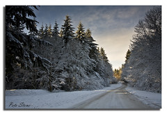 Winter arrives at Lyminge Forest (pete stone) Tags: snow kent pines shepway canoneos5d rhodesminnis awinterscene lymingeforest