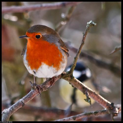 Robin & Co.