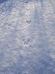 tiny-tinymouse tracks