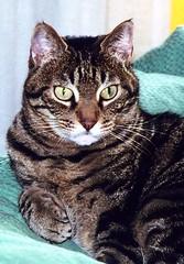 """CAPO"" (Valt3r Rav3ra - DEVOted!) Tags: film cat 35mm colori gatto capo analogico valt3r"