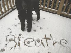 Breathe (~DanaMarie~) Tags: winter dog snow canon outdoors deck poodle breathe pawprints