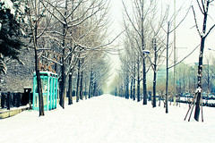 Telephone Boxes (stuckinseoul) Tags: park winter blackandwhite snow canon geotagged photography photo asia photos box telephone korea seoul southkorea olympicpark telephonebox kt 2010 bangi      republicofkorea    sigma30mmf14exdchsm    songpagu     bangidong canoneos550d canoneosrebelt2i canoneoskissx4 550d stuckinseoul
