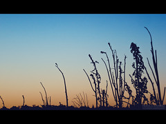 A New Sunset (Franco Martin R) Tags: sunset shadow plants cinema black santafe primavera look backlight contraluz movie dead atardecer spring plantas warm stripe style sombra muerte burn frame rosario 169 negra dsc sonycybershot w35 quemado franja calido blackstripe blackframe baigorria movielook cinemastyle moviestyle cinemalook fotografiaindependiente francoramirez franjanegra sonycybershotdscw35