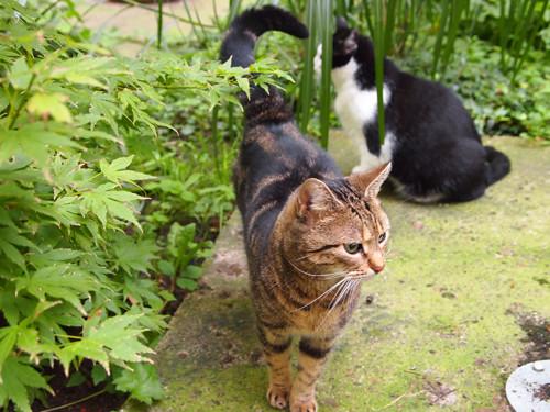 berlin cats