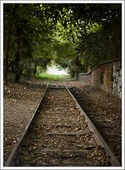 (Vasilis Mantas) Tags: tree nature train canon greece rails kalamata 500d vmantas vmantasphotography