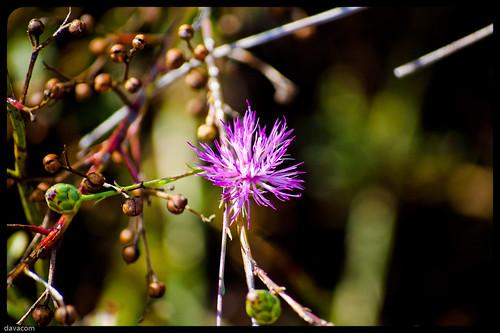 Florecillas de lugar