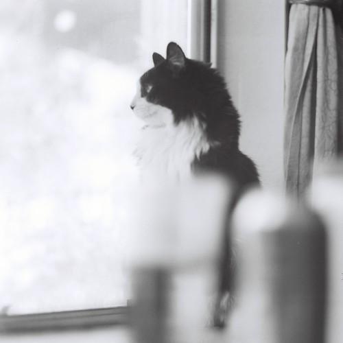 フリー写真素材, 動物, 哺乳類, ネコ科, 猫・ネコ, 窓辺, モノクロ写真,