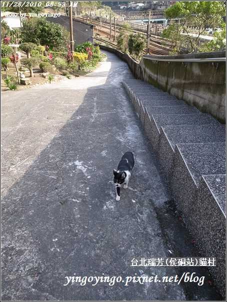 台北瑞芳(侯硐站)貓村20101128_R0016293