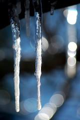 Shiny 'cicles (Bhamgal) Tags: snow cold ice melting bokeh alabama icicles