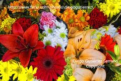 ACUARELA (Primera venta en Getty Images) Foto robada 23.000 visitas!! (Di Gutti (diegogutierrez79@gmail.com)) Tags: espaa flores flower color colour fleur spain song aquarelle flor andalucia cadiz  blume fiore blomst cancion gettyimages lore bloem aquarell iek   blumme aribarroso mercadodelasfloresdecadiz