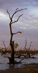 IMG_0007 (Bianca Ho) Tags: lake pamamaroo