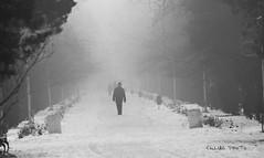 Foggy Thoughts (culiac) Tags: park old bw white snow black cold fog nikon thoughts alb nikkor 70300 d90 negru albnegru vrii culiac