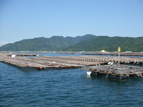 広島 牡蠣 画像4