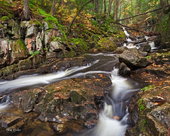 slippery when wet ([Adam Baker]) Tags: new york nature forest canon landscape flow moss slick stream hiking upstate rainy lush eddy preserve slippery adirondack 1740l adambaker 5dmkii riversandlakestnc11