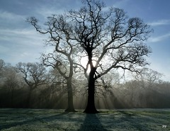 I have seen the light (jump for joy2010) Tags: trees light england misty moving oak quercus shadows january wells somerset frosty mighty atmospheric sunbeams 2011 wtmwgroupiconwinner joyrussellfrostassignment